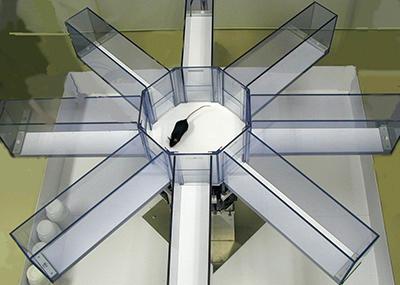 Eight-arm radial maze